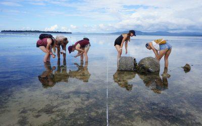 Mangroves and Invertebrates Assessment in Bunaken